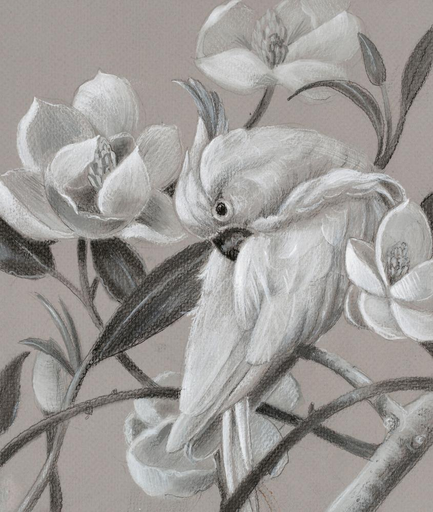 Parrot with Magnolias ton... | Art by Marsha Bowers