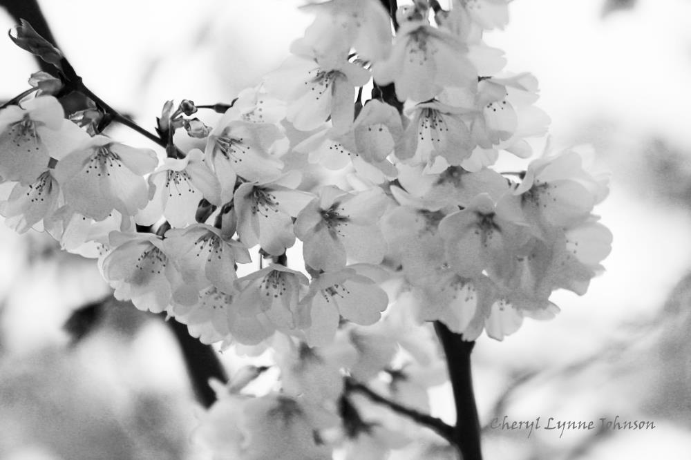 flowers | Cheryl Lynne Johnson Art ...