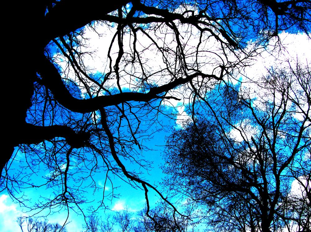 tree   Cheryl Lynne Johnson Art ...