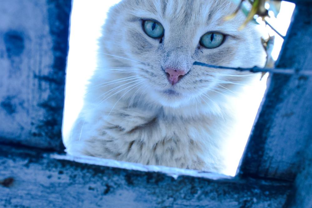 Cat eyes | Snap the moment photograp...