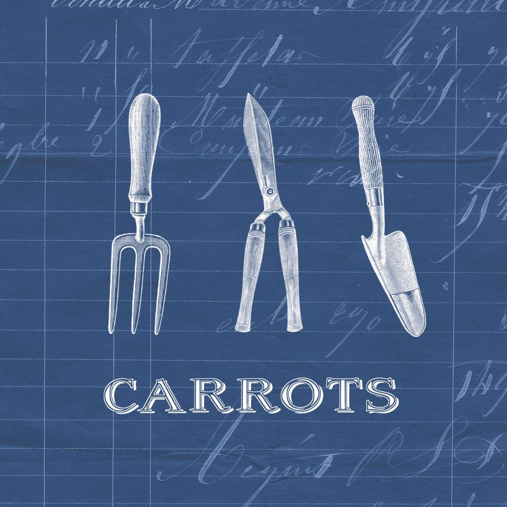 CARROTS |