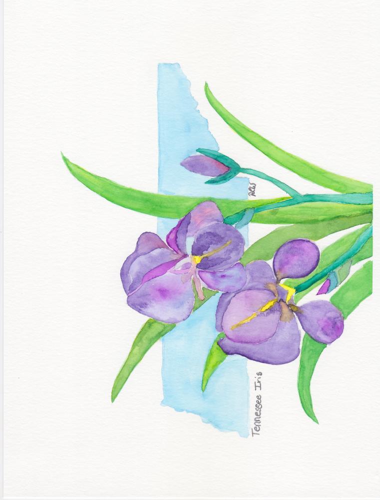 Tennessee Iris | Paige's Palette