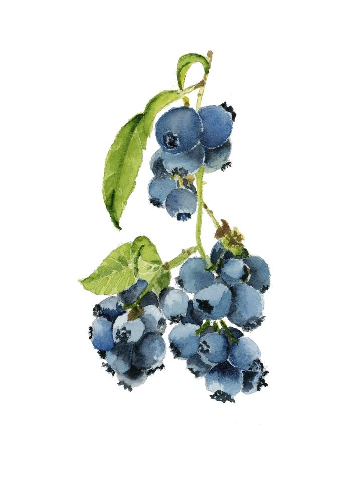 Blueberry Bunch | What a color by Noemi
