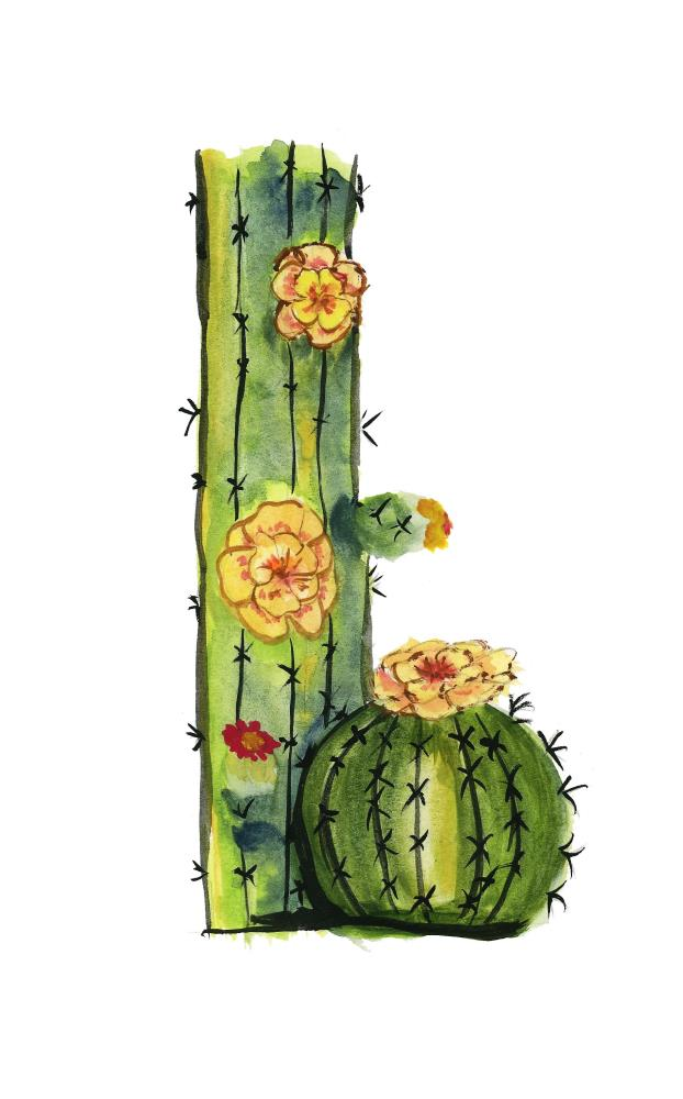 2 Cactus | What a color by Noemi