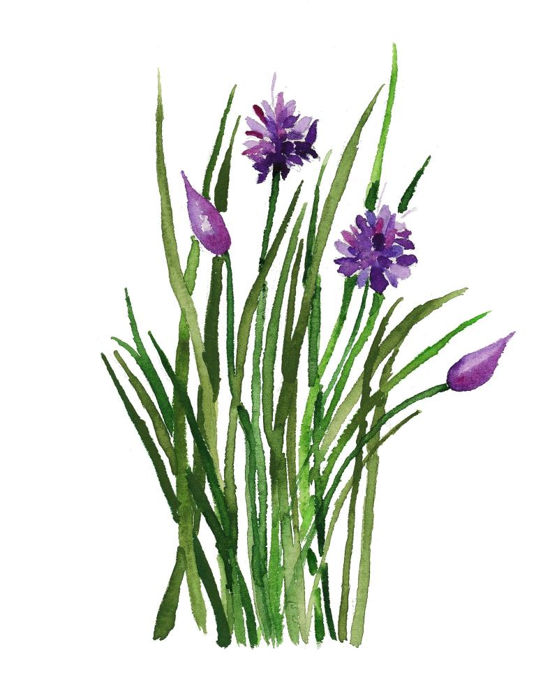 Chives 1 | What a color by Noemi