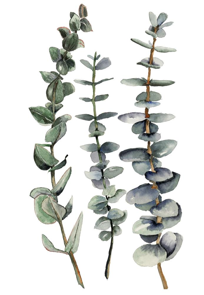 3 Eucalyptus branches | What a color by Noemi