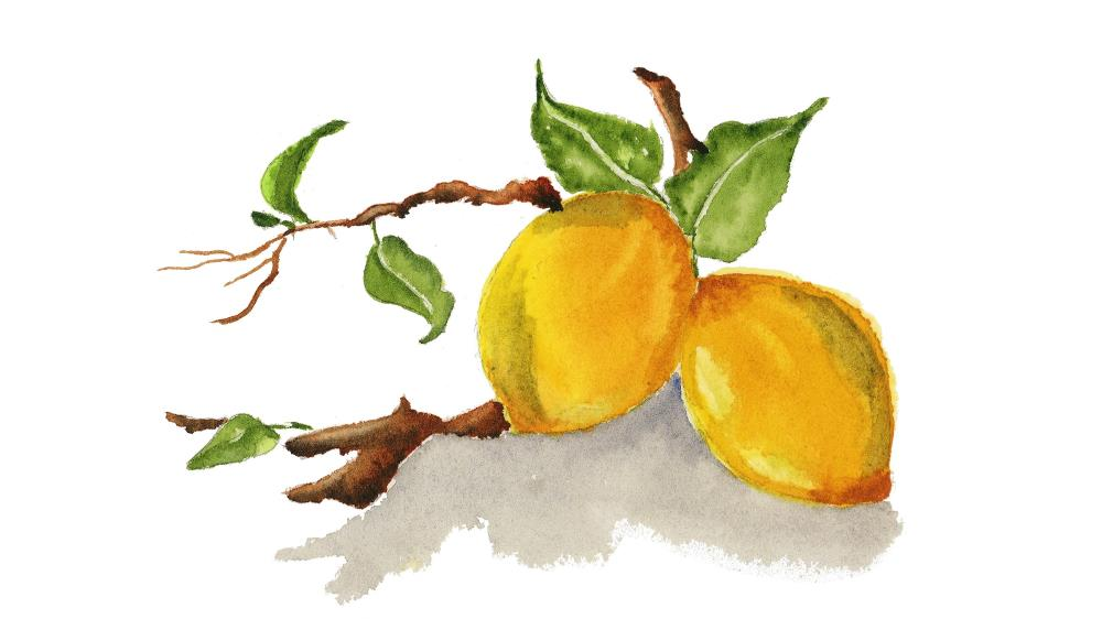 Lemons on a branch | What a color by Noemi