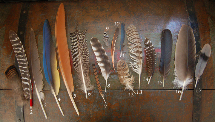 69718cdac0e4b feather collection - PaleoPlanet