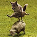 aAn_dWolf&Sheep.jpg