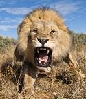 LionClaws