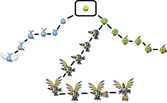 Pokemon Chatot Evolution Images | Pokemon Images