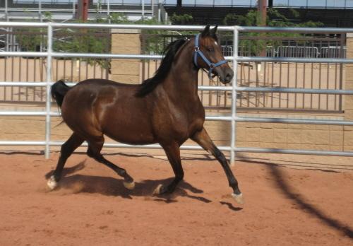 Pleasure horse forum
