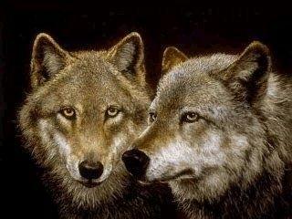 WolfHeads.jpg