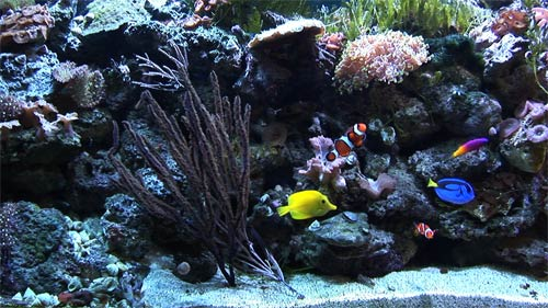 Ambient water video aquarium dvd is more than just a for Saltwater fishing video