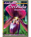 Ambient Orchids DVD