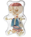 Gummy Bear Anatomy Model