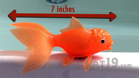 Koi toy water activated light up color changing fish toy for Plastic koi fish