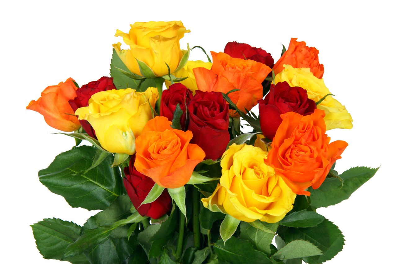 flower delivery in Syracuse 84075