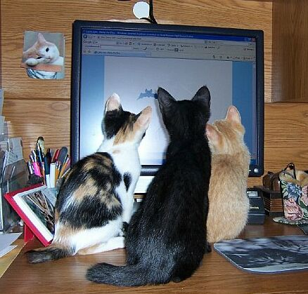 Cats watching computer