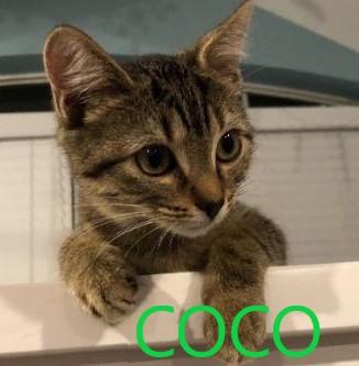 Coco potw cat 10.12.20