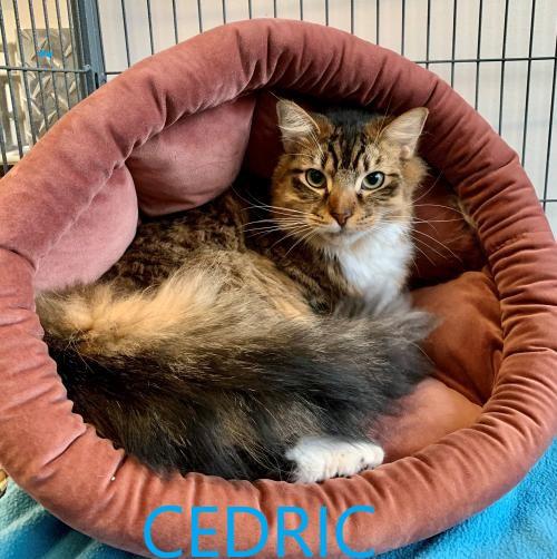 Cedric potw cat 5.8.21