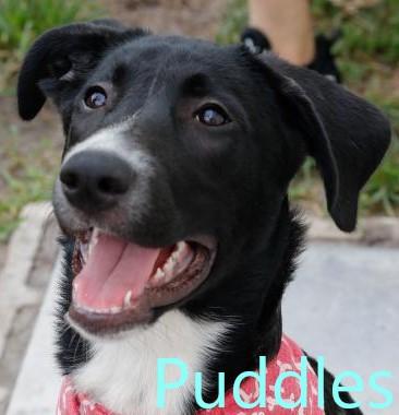 Puddles potw dog 11.25.20