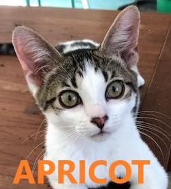 Apricot potw cat 8.5.20
