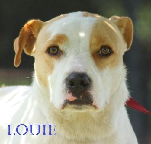 Louie POTW