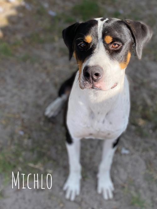 Michlo potw dog 6.11.21