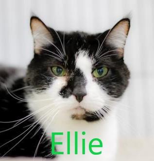 Ellie potw cat 10.10.21