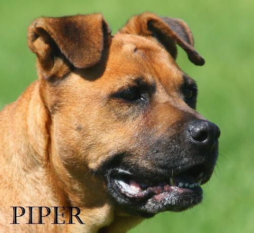 Piper POTW