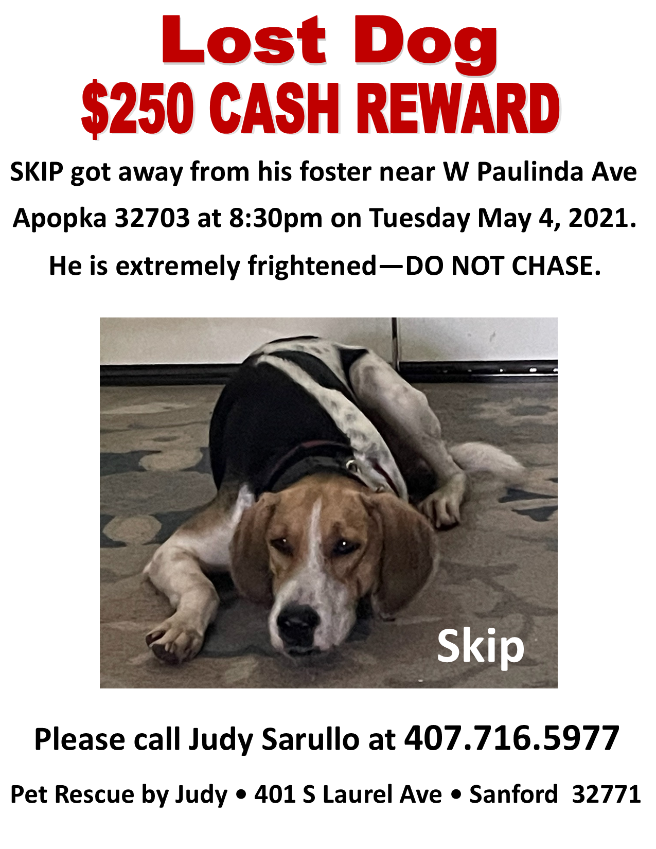 May 2021 Skip Lost Dog
