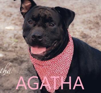 Agatha potw dog 10.21.20