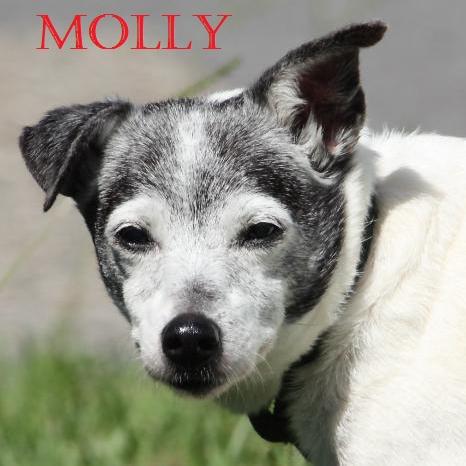 Molly POTW