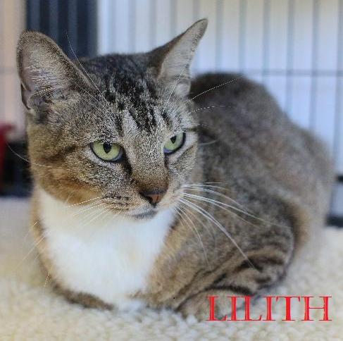 Lilith POTW