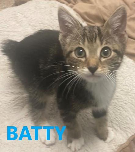 Batty potw cat 7.21.21