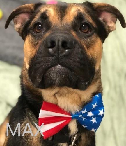 Max potw dog 2.25.21