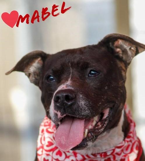 Mabel potw dog 7.28.21