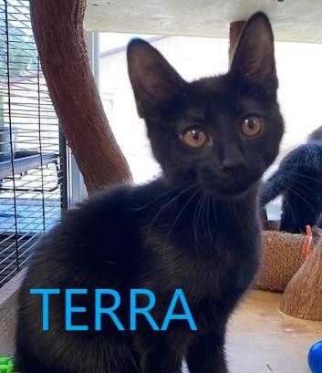Terra potw cat 6.29.20