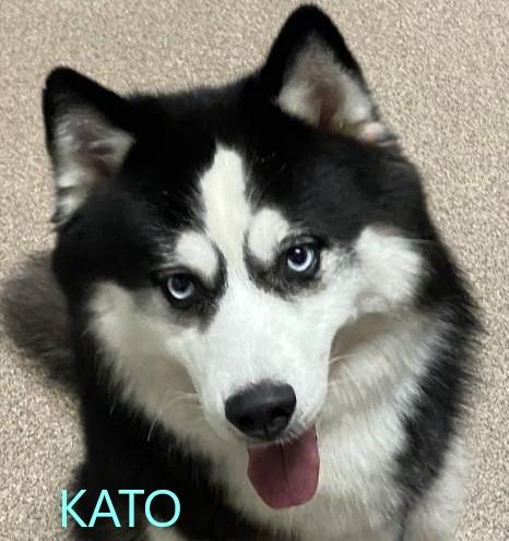 Kato potw dog 5.27.20