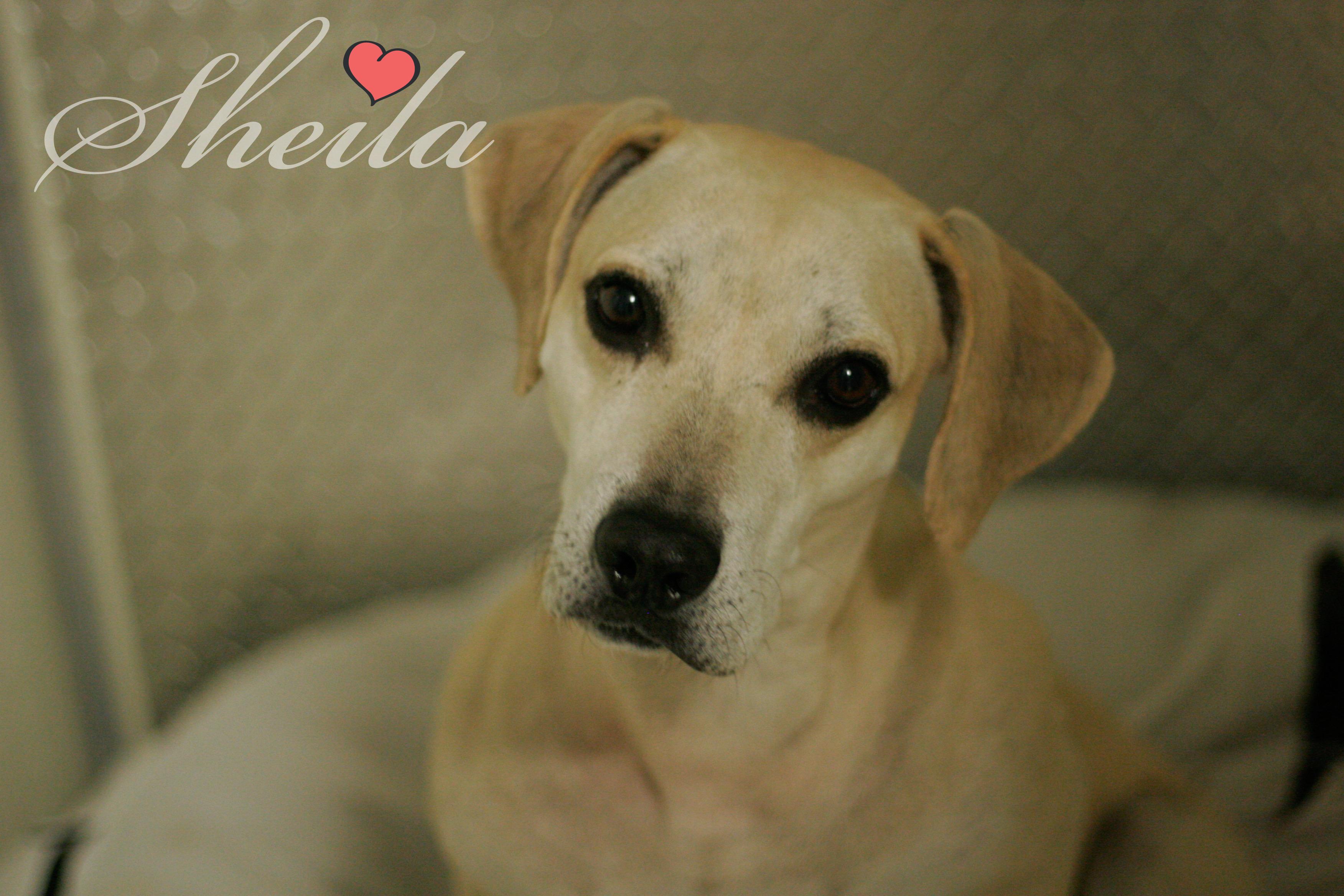 Sheila potw dog 11.13.19
