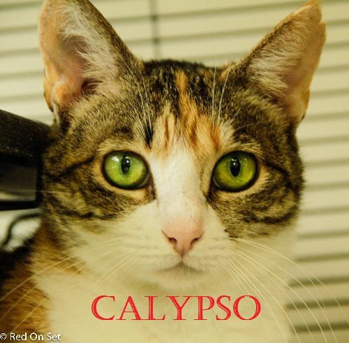Calypso POTW
