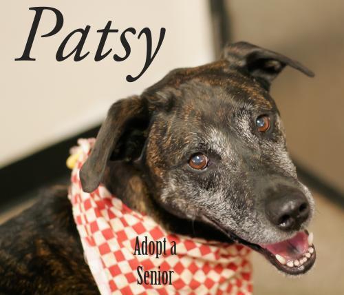 Patsy potw 4.21.20 dog