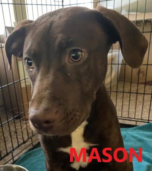 Mason potw dog 7.21.21