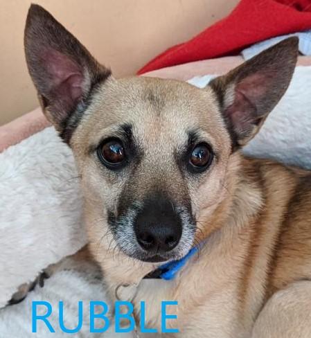 Rubble potw dog 7.27.20