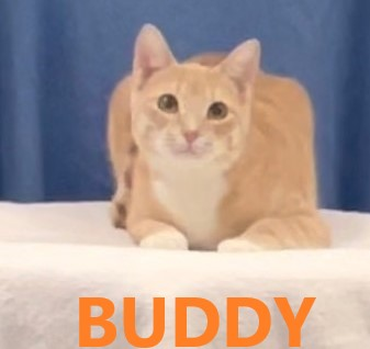 Buddy potw cat 4.10.21
