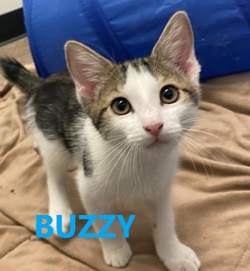 Buzzy potw cat 7.28.21