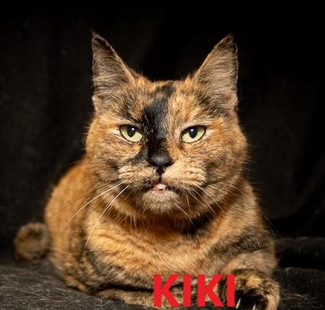 Kiki potw cat 1.26.20