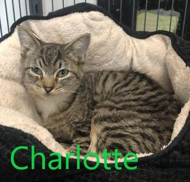 Charlotte potw cat 10.20.21