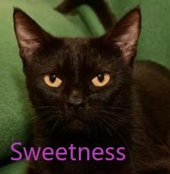 Sweetness potw cat 5.27.20